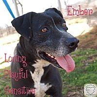 Adopt A Pet :: Ember - Washburn, MO