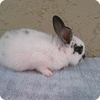 Adopt A Pet :: Jojo - Bonita, CA