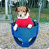 Adopt A Pet :: Ruby - Chesapeake, VA