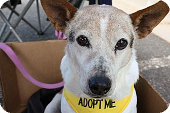 Terrier (Unknown Type, Small) Mix Dog for adoption in Eden, North Carolina - Prince