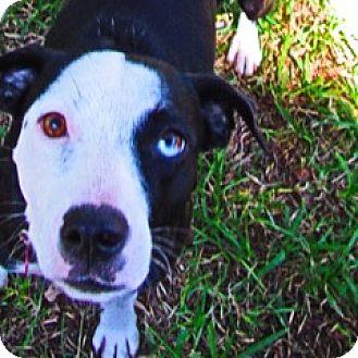 Spaniel (Unknown Type)/Terrier (Unknown Type, Medium) Mix Dog for adoption in Von Ormy, Texas - Carly