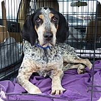 Adopt A Pet :: Alice--RESCUED! - Marlinton, WV