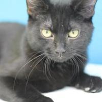 Adopt A Pet :: Byte - Pratt, KS