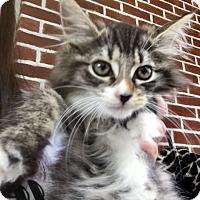 Adopt A Pet :: Harmony - River Edge, NJ