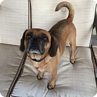 Adopt A Pet :: Chaska - Iroquois, IL