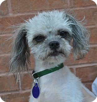 Shih Tzu/Yorkie, Yorkshire Terrier Mix Dog for adoption in Atlanta, Georgia - Tom