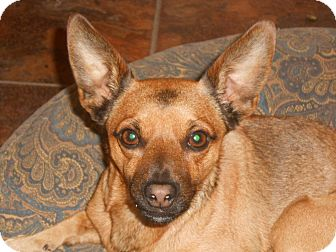 Chihuahua Mix Dog for adoption in Arenas Valley, New Mexico - DJ