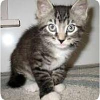 Adopt A Pet :: Darby - Shelton, WA
