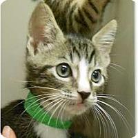 Adopt A Pet :: Captain - Maywood, NJ