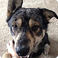 Adopt A Pet :: Gunner - East McKeesport, PA