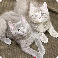 Adopt A Pet :: Beatrice & Ramona - Chicago, IL