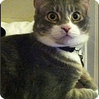 Adopt A Pet :: Skeeter - Jackson, NJ