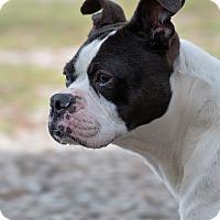 Adopt A Pet :: Zora - Greensboro, NC