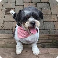 Adopt A Pet :: Bethie Bear - Mount Gretna, PA