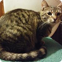 Adopt A Pet :: Albus - Farmington, AR