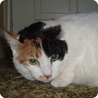 Adopt A Pet :: Kitty - Germansville, PA