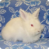 Adopt A Pet :: Snow - Chesterfield, MO