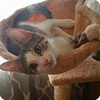 Adopt A Pet :: Cass - LaGrange Park, IL