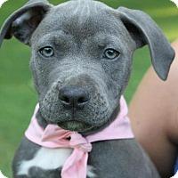 Adopt A Pet :: Athena - Durham, NC