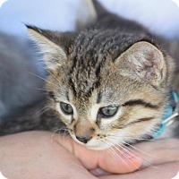 Adopt A Pet :: Timber - Rosamond, CA