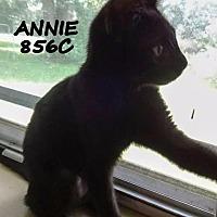 Adopt A Pet :: Annie - Spring, TX