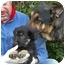 Photo 4 - German Shepherd Dog Mix Puppy for adoption in Los Angeles, California - Katy von Karlsruhe