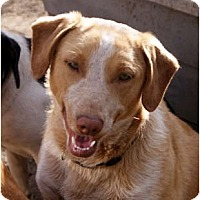 Adopt A Pet :: Raskal - Glenpool, OK