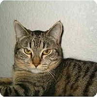 Adopt A Pet :: Jamie in Keizer, OR - Keizer, OR