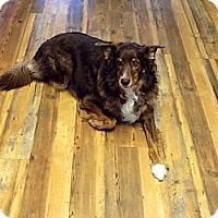 Adopt A Pet :: Chox - Denver, CO
