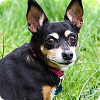 Adopt A Pet :: ROXY - Wilmington, DE