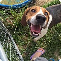 Adopt A Pet :: Bogey-URGENT - Providence, RI