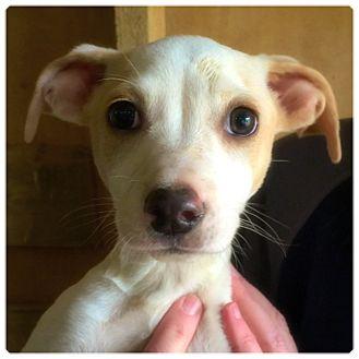 Terrier (Unknown Type, Medium) Mix Puppy for adoption in Powder Springs, Georgia - Birdie
