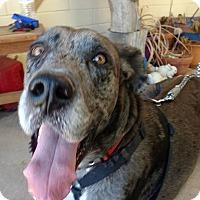 Adopt A Pet :: Rocky - Mesa, AZ