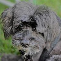 Adopt A Pet :: Gizmo - Matthews, NC