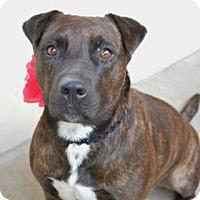Adopt A Pet :: Akiko - Dallas, TX