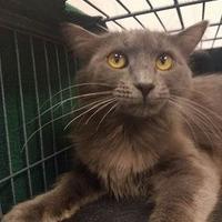 Adopt A Pet :: Queen - Aberdeen, SD