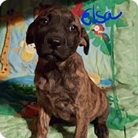 Adopt A Pet :: Elsa - Burlington, VT