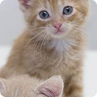 Adopt A Pet :: Atticus - Washburn, WI