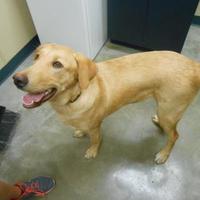 Adopt A Pet :: Bandit (Clooney) - Quincy, IL