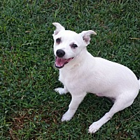 Adopt A Pet :: OZZIE - Cranston, RI