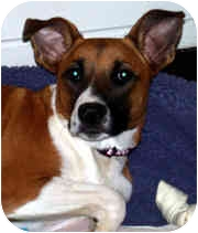 Boxer Mix Dog for adoption in Milledgeville, Georgia - China