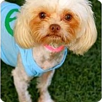 Adopt A Pet :: Peggy Sue - Mission Viejo, CA