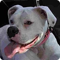 Adopt A Pet :: Trixie - Grafton, MA