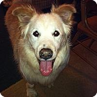 Adopt A Pet :: Mory - Foster, RI