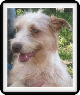 Terrier (Unknown Type, Medium) Mix Puppy for adoption in Winchester, California - SASSY