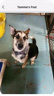 Blue Heeler/Beagle Mix Dog for adoption in North Pole, Alaska - Leigha