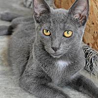 Adopt A Pet :: Jasmine - Bronx, NY