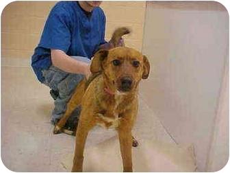 Shepherd (Unknown Type) Mix Dog for adoption in Burnsville, North Carolina - Scarlette