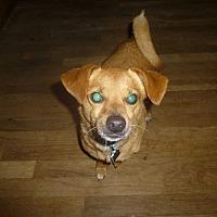 Adopt A Pet :: Simba - Glastonbury, CT