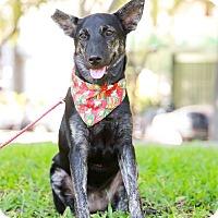 Adopt A Pet :: Anina - San Mateo, CA